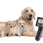 détection de l'ovulation chez les chiennes de l'œstrus des chaleurs de la date d'accouplement pour les chiennes chiens la meilleure méthode chaleurs silencieuses test de progestérone quand