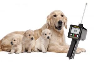 Appareil pour les éleveurs de chiens confrontés à des problèmes de reproduction